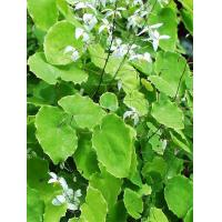 Buy cheap Extract of herba epimedii from wholesalers