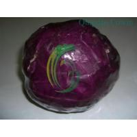 China purple cabbages.exporter on sale