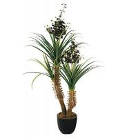 Buy cheap 216CM YUCCA PLANT,TREE from wholesalers
