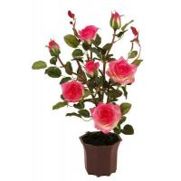 Buy cheap 50CM Rose Bush PLANT,TREE from wholesalers
