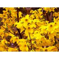 Buy cheap St.John'Wort Extract Powder from wholesalers