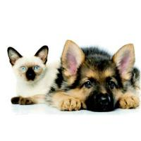 Buy cheap Pet Stain & Odor from wholesalers