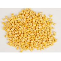 Buy cheap Freeze-dried fruit and vegetables series FD CORN product