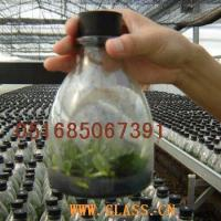 Buy cheap Glasswork bottles for culturing Aweto from wholesalers