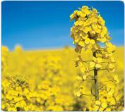 Buy cheap Biofuels from wholesalers
