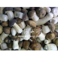 Buy cheap Stropharia rugoso product