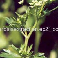 Buy cheap Celery Seed Extract,Apium Graveolens Extract from wholesalers