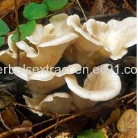 Buy cheap Oyster Mushroom Powder,Pleurotus Ostreatus from wholesalers