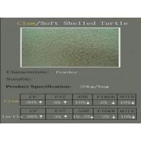 Buy cheap Clam  Soft Shelled Turtle product