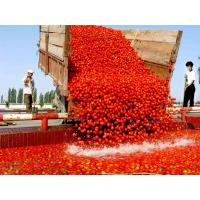 Buy cheap Tomato paste in drum packing Tomato paste in drum packing Tomatopasteindrumpacking from wholesalers