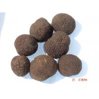 Buy cheap Canned Truffle Tuber Sinense FreshTuberAestivum product