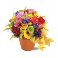 Buy cheap Best Sellers Teleflora's Fresh Blossom Potpourri from wholesalers