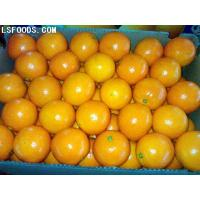 Buy cheap Fresh Navel Orange from wholesalers