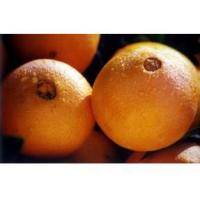 Buy cheap Navel orange [1] navel orange JYNAVEL OR from wholesalers