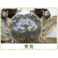 Buy cheap Big binding crabs product