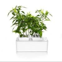 Buy cheap Mini DIY Hydroponic Flower Net Pot Grow System from wholesalers