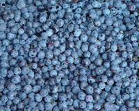 Buy cheap Frozen Berries IQF blueberries from wholesalers