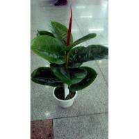 Item name: Factory high simulation artificial ficus elastica bonsai green colour