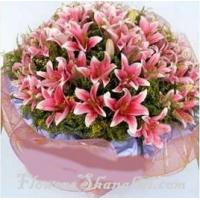 Buy cheap Lilys Lily's love from wholesalers