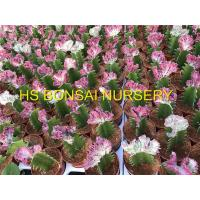Buy cheap Cactus cactus, tropicl plants, from wholesalers