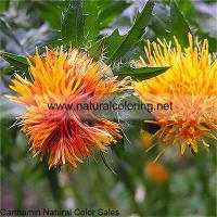 Buy cheap Carthamus Tinctorius Yellow Natural Color Sales from wholesalers