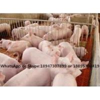 Buy cheap pig feed additive premix feed --Fatten Promoter from wholesalers