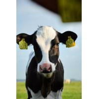 Buy cheap Nane: Zeolite as a Rumen Buffer from wholesalers