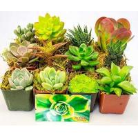 Buy cheap Fat Plants San Diego Succulent Plants 8 from wholesalers