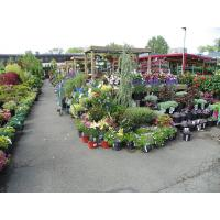 Buy cheap Nearest Garden Nursery from wholesalers