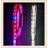 China Plant Growing Led Light Strip on sale
