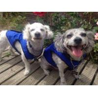 Buy cheap Dog Cooling Jacket S M L XL XXL from wholesalers