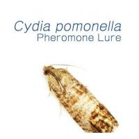 Buy cheap Pheromone Lure for Cydia Pomonella (Codling Moth) from wholesalers