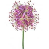 China Artificial Flowers 32 Onion flower on sale