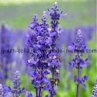 Buy cheap Lavender Pollen Tablets from wholesalers