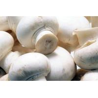 Buy cheap Champignon Mushrooms with White Button from wholesalers