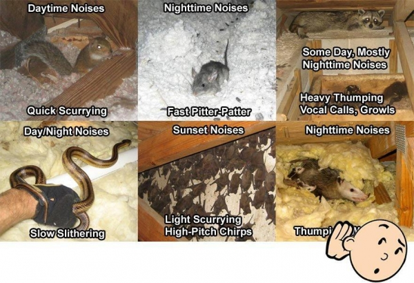 Buy cheap Mice In Attic Noise from wholesalers
