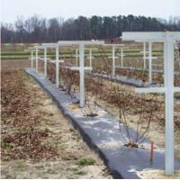 Buy cheap EcoTrellis, Raspberry Trellis and Stake, Vineyard Trellis, Pack of 2 from wholesalers