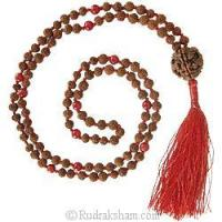 Buy cheap Rudraksha - Red Coral Mala in Thread from wholesalers