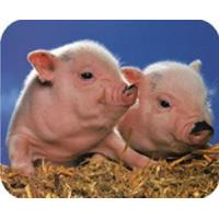 Buy cheap JM100P+-The special enzyme in sucking pig feedingstuff from wholesalers
