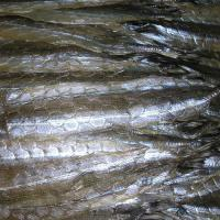 Buy cheap series of dried fish product