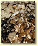 Buy cheap Mushroom Granules & Powder for Industrial Use from wholesalers