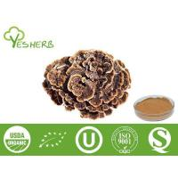 Buy cheap Mushroom Extract Coriolus Versicolor Extract - Polysaccharides 10%-50% from wholesalers