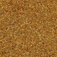 Buy cheap Seeds Red Broomcorn Millet from wholesalers