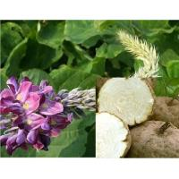 Buy cheap Pueraria Mirifica Extract, White Kwao Krua Extract from wholesalers