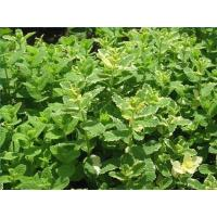 Buy cheap Lemon Balm Extract, Melissa Herb Extract from wholesalers