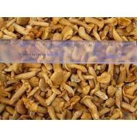 Buy cheap Cantharellus cibarius mushroom in brine from wholesalers