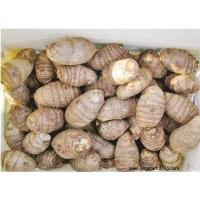 Buy cheap Other Fresh and Frozen Vegetables Product Title:Taro 02 product