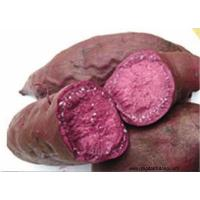 Buy cheap Other Fresh and Frozen Vegetables Product Title:Purple Sweet potato product