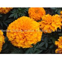 Buy cheap Marigold Food Supplement Multivitamins Minerals Lutein from wholesalers
