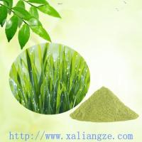 Buy cheap Barley grass juice powder from wholesalers